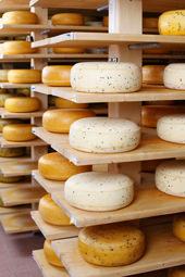 Fromage conservé sur des étagères pour mûrir