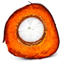 Couper les fruits du palmier à huile