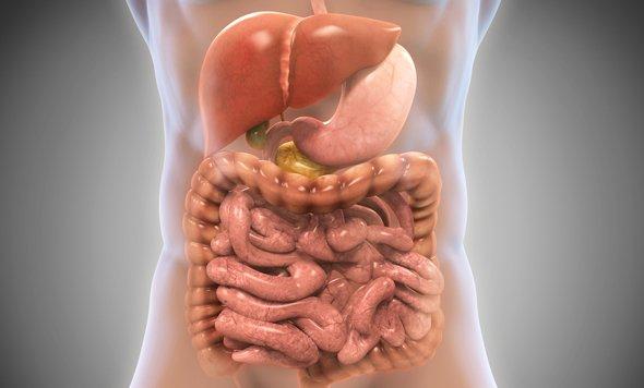 Système digestif humain