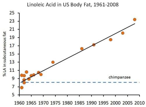 Acide linoléique dans la graisse corporelle humaine