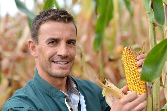 Mâle agriculteur contrôle sur le maïs
