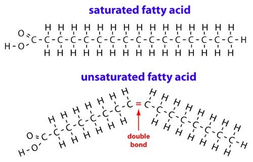 Acides gras saturés vs insaturés