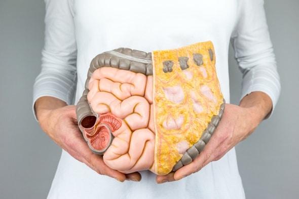 Femme tenant un modèle d'intestins humains